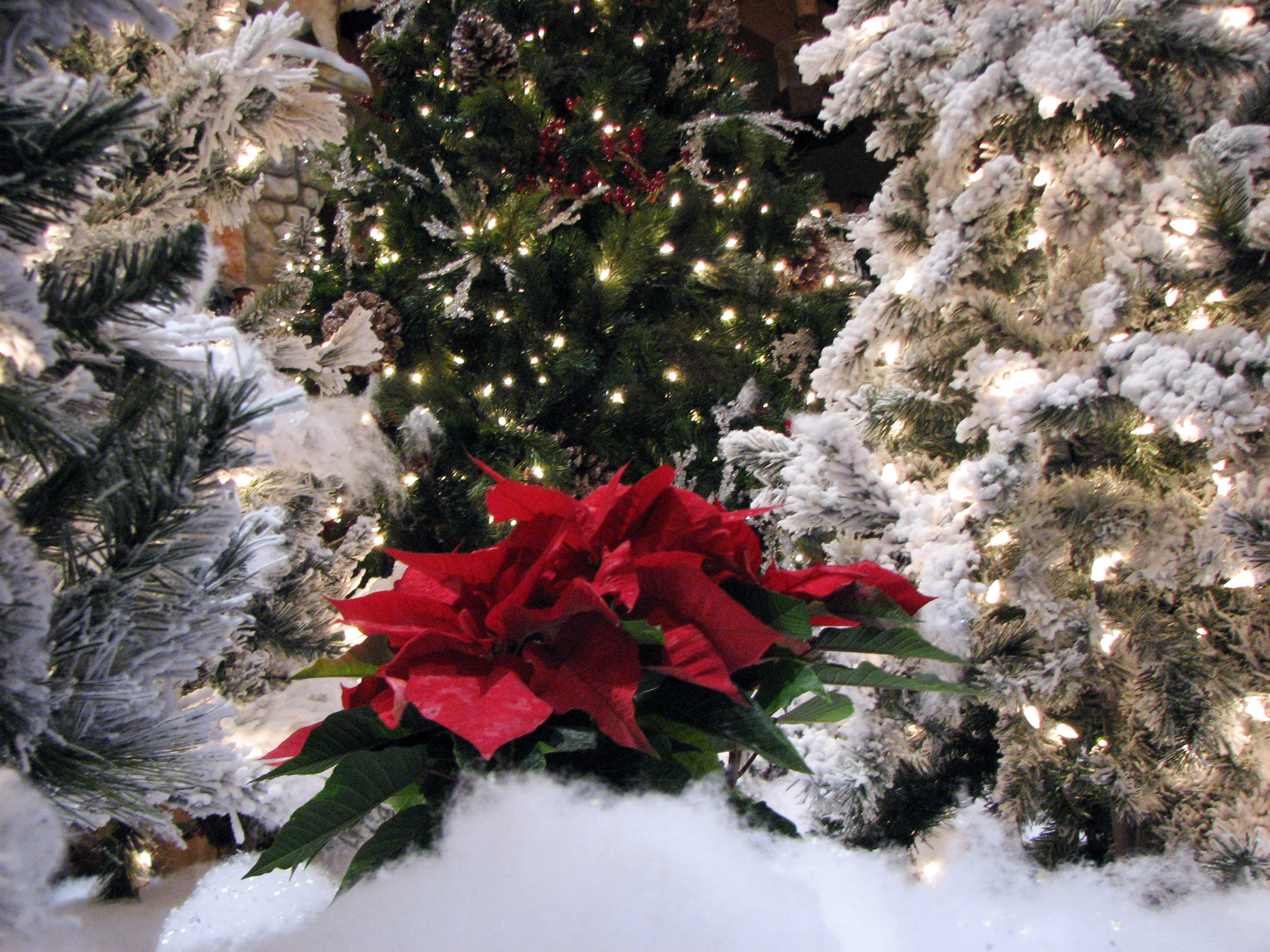 Christmas Across The Carolinas: Great Wolf Lodge, Concord, North ...